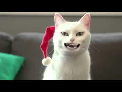 Weihnachten ist vorbei - YouTube