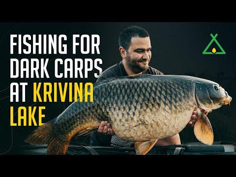 Fishing For DARK CARPs At Krivina Lake