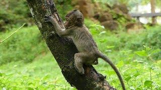 Lori Baby Monkey Best Fresh - Lori Happy Feels In Her Playing & Comfortable