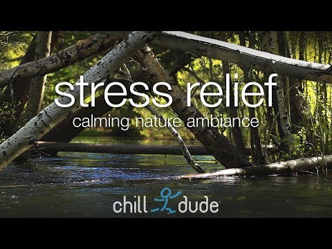 Stress Relief Calming Nature Ambiance