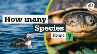 How many species are there?