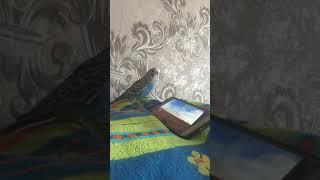 Рикки и документальный фильм про попугаев