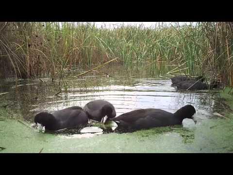 Crane Trust - Nebraska Wildlife