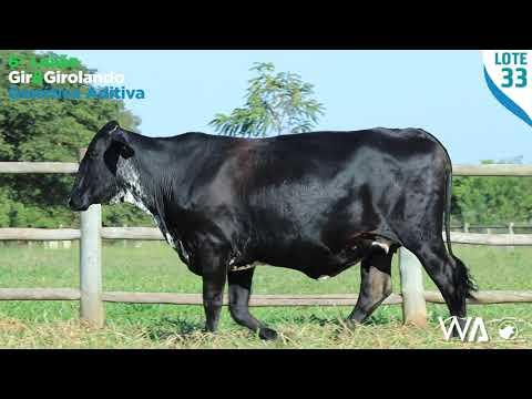 LOTE 33 - 5307 BJ - 6º Leilão Gir & Girolando Genética Aditiva