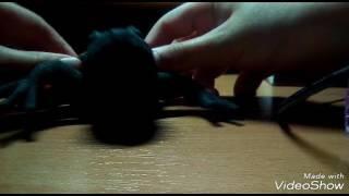 Это клип моей лягушки