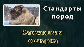 Стандарты пород  Кавказская овчарка