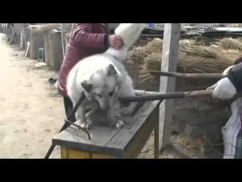 high to animal abuse by China