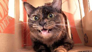 My Cat's Mumbling, Chattering, Evil Laugh!
