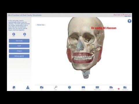 Dr sidiiq Maxamuud xasan: anatomy and physiology -digestive system - part-2: Somali