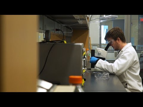 Central Michigan University microscopy program offers giant opportunities