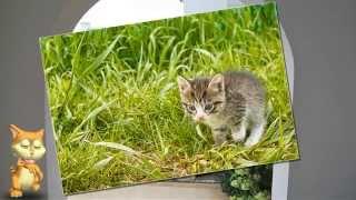 котят отдам в Красноярске