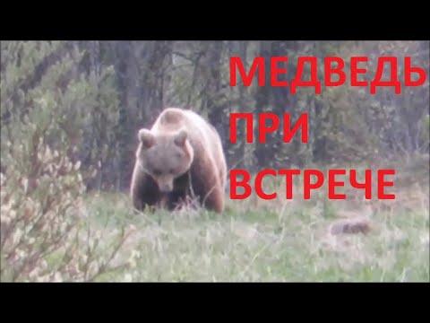 Вопрос: Как выжить при нападении медведя?