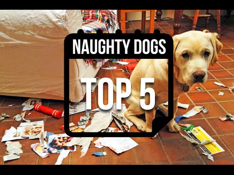 TOP 5 Naughty Dogs Destroying The House || Top Five Viral Week