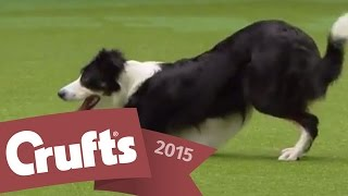 Heelwork to Music  Freestyle International Competition | Crufts 2015
