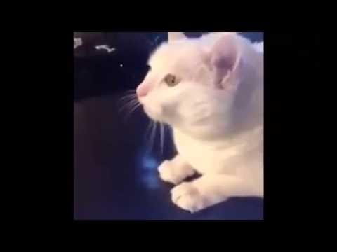 Gato metalero u lml