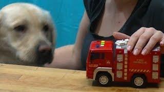 Wóz strażacki marzenie każdego chłopca ...