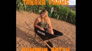 First time at Tanaka Farms Pumpkin Patch | VLOG