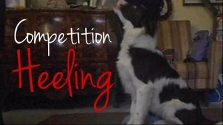 This Video Previously Contained A Copyrighted Audio Track. Due To A Claim By A Copyright Holder, The Audio Track Has Been Muted.     Gin, Border Collie Puppy - Training Obedience (competition Heeling)