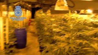 Desmantelada en Toledo la mayor plantación subterránea de marihuana hasta la fecha