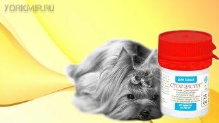 Цистит у собак | Симптомы | Лечение | Профилактика.