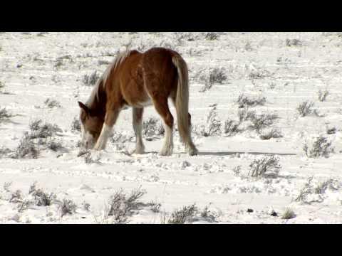 Horses In Morley Alberta