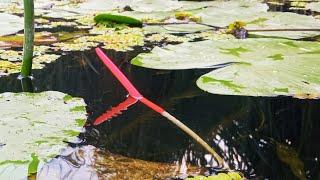 ДУШЕВНАЯ РЫБАЛКА В ТИХОМ УЮТНОМ МЕСТЕ Рыбалка на Поплавок