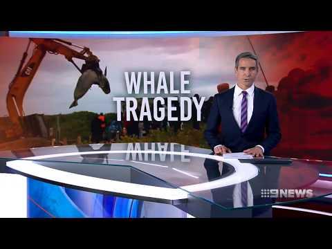 Whale Tragedy  | 9 News Perth