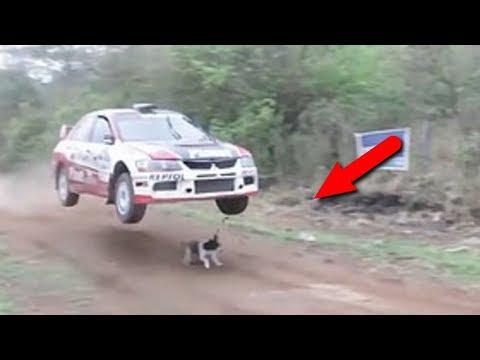 Животные, которым реально повезло! - Cмотреть видео онлайн с youtube, скачать бесплатно с ютуба