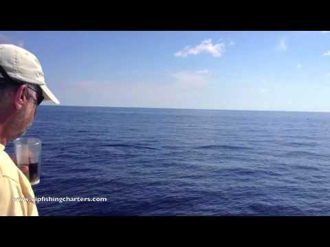 Pilot Whales off Palm Beach