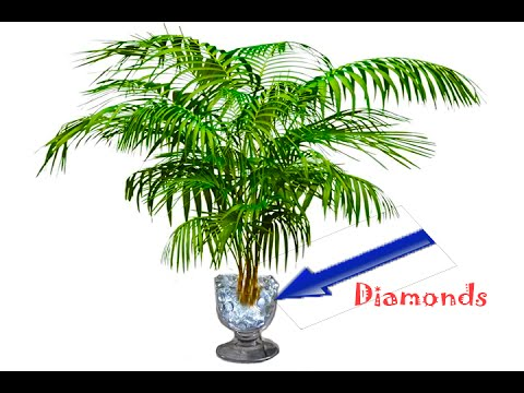 Plant That Only Grows In Diamond Rich Soil Discovered | Science News