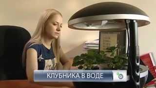 """Выращивание клубники в установке """"Домашний сад"""""""