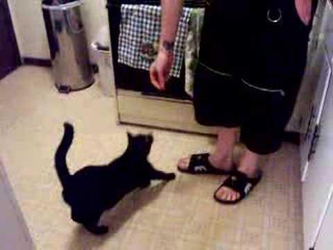 Trick Cat