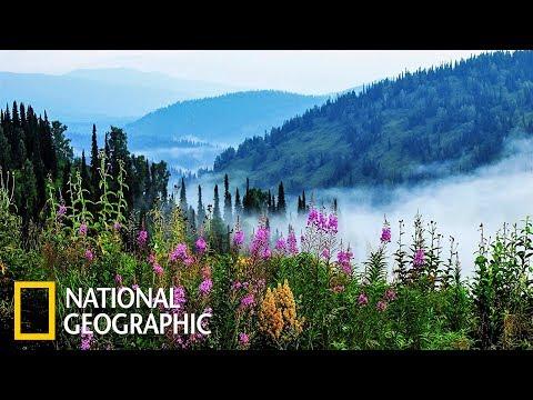 Дикая природа России: Сибирь   Фильм 1 из 6   (National Geographic) - Видео онлайн