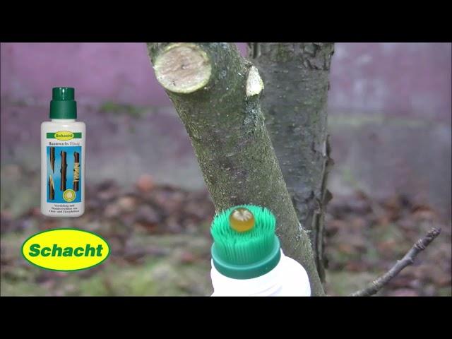 Baumwunden natürlich verschließen - Baumwachs flüssig