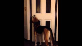 Repeat youtube video My Dog Opens A Door