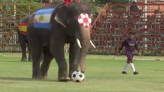 Elephant team takes on Thai schoolboys before World Cup