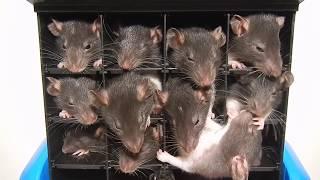 Мышки Видео Прикол