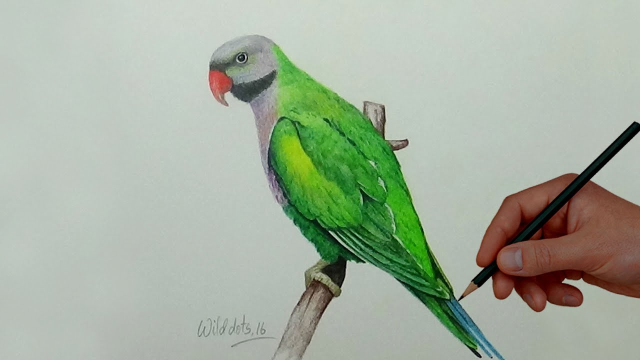 Drawing A Bird With Simple Colored Pencils | Derbyan ...