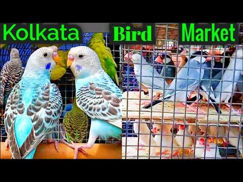 Kolkata Bird Market In Galiff Street Visit The Largest Pet Market In Asia