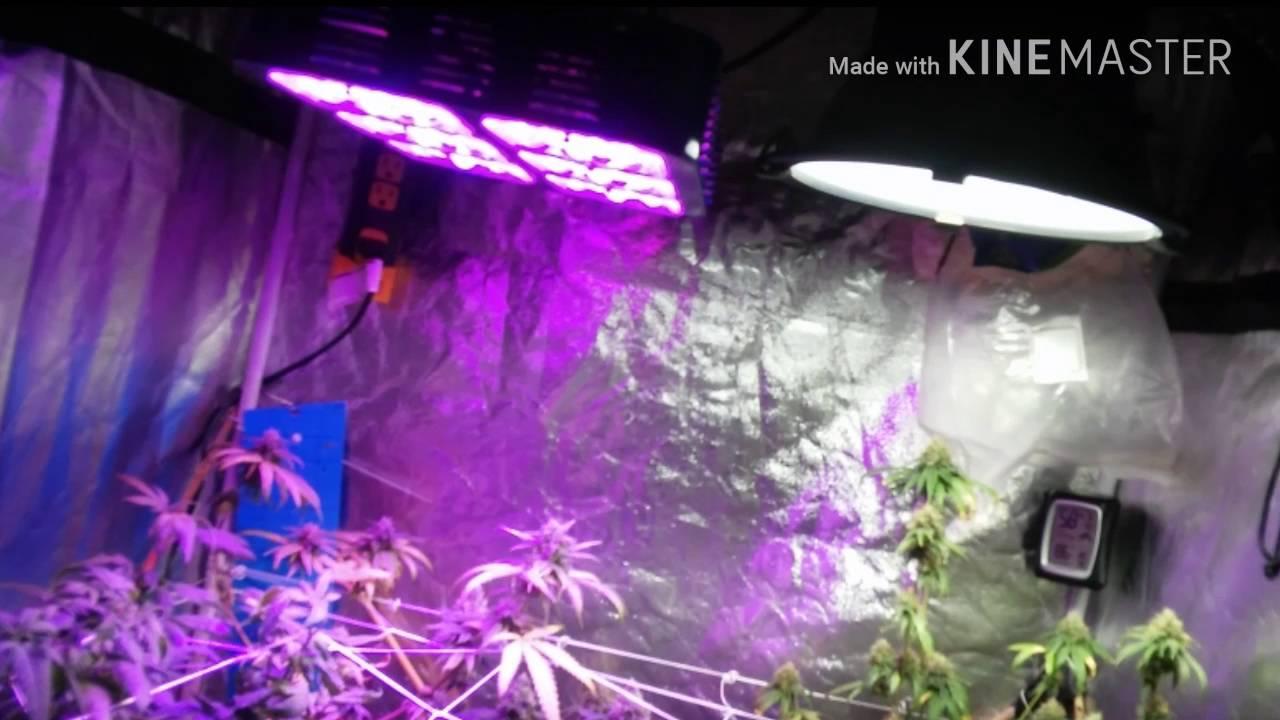 3x3 tent grow 🚜 / flood&drain 🌊/spectrum king 💡 & H160d 💡
