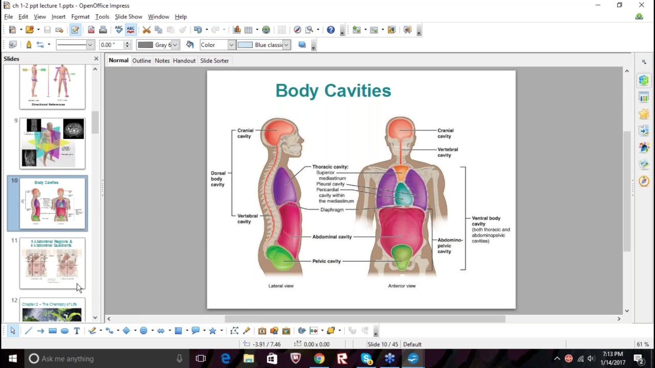 Anatomy and Physiology Test Quiz 1 study session - YouTube