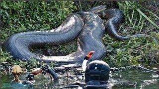 Chuyện lạ có thật trên thế giới -  Những loài vật khổng lồ đáng sợ trên thế giới