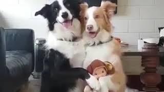 Семейное фото собачек🐶