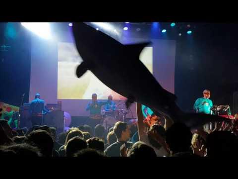 The Aquabats - The Shark Fighter (live)