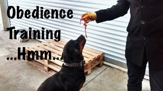 Rottweiler & Cane Corso Obedience Training (food)