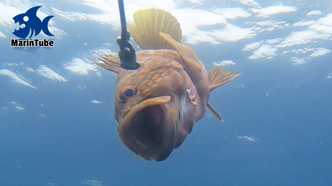 水深40mに潜む大魚群にいろんな餌を落としてみたら・・・ #2