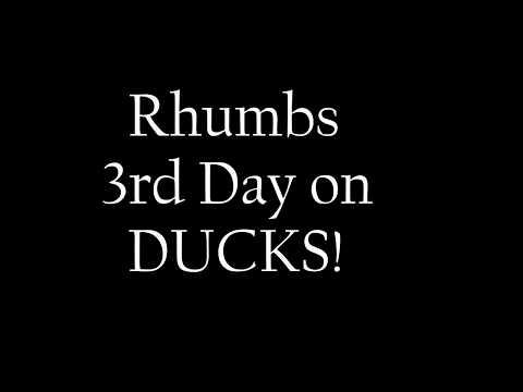 download HERDING - RHUMBS 3RD DAY on ducks!