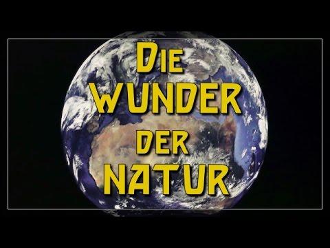 Die WUNDER der NATUR!  Vlog11