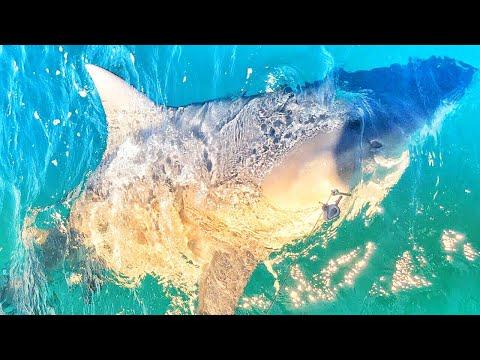 Fishing Deep Underground Sharks!!! Do Monster Sharks Eat Big Shark Fish?