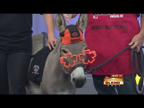 Lusco Farms Rescue – Donkeys are special  Are you special enough to
